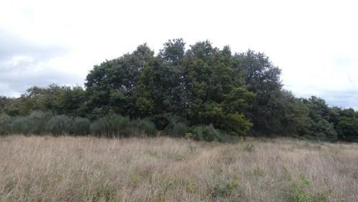 Aparece un castro inédito a tres quilómetros da antiga Lucus Augusti