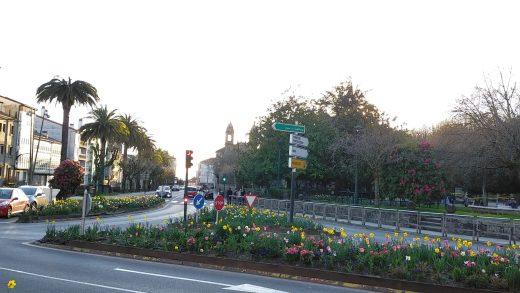 O Picudo Vermello xa ameaza as palmeiras dos espazos históricos de Santiago