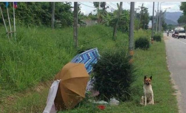 Cão comove a Internet por se recusar a deixar o local onde foi abandonado pelo dono 4