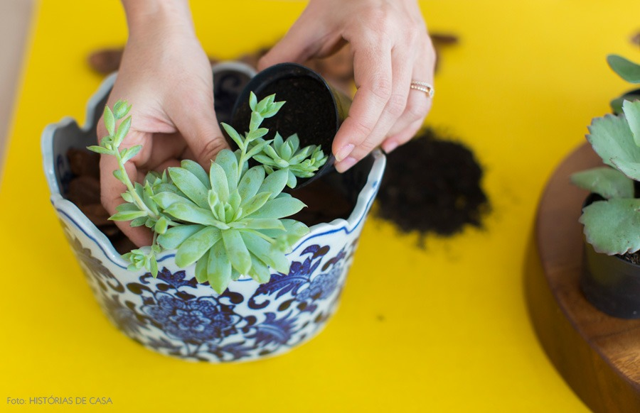 03-decoracao-arranjo-suculentas-plantas