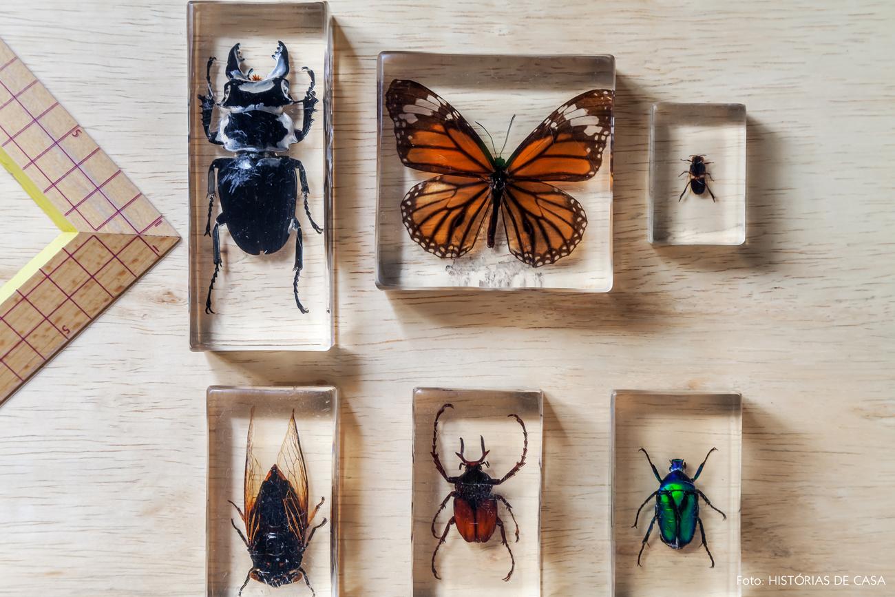 14-decoracao-kitsch-colecao-insetos-empalhados