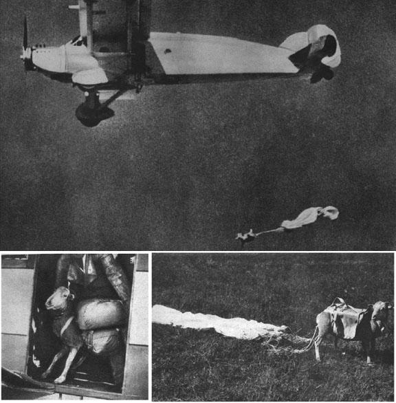 Oveja en paracaídas