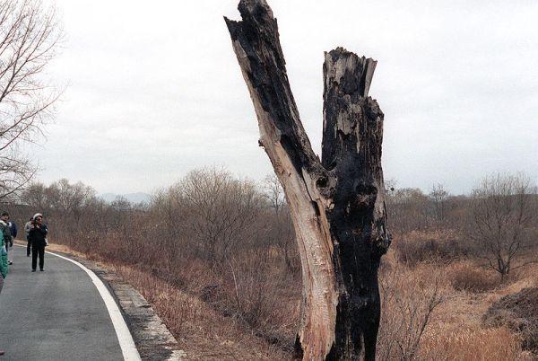 Lo que quedó del árbol