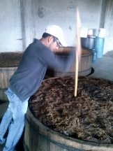 Removiendo el mosto de agave en pleno proceso de fermentación. Paleque Mezcal Sinai en San Dionisio de Ocotepec