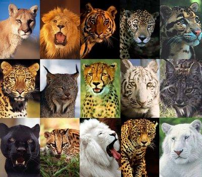 As Manchas do Leopardo (2/6)