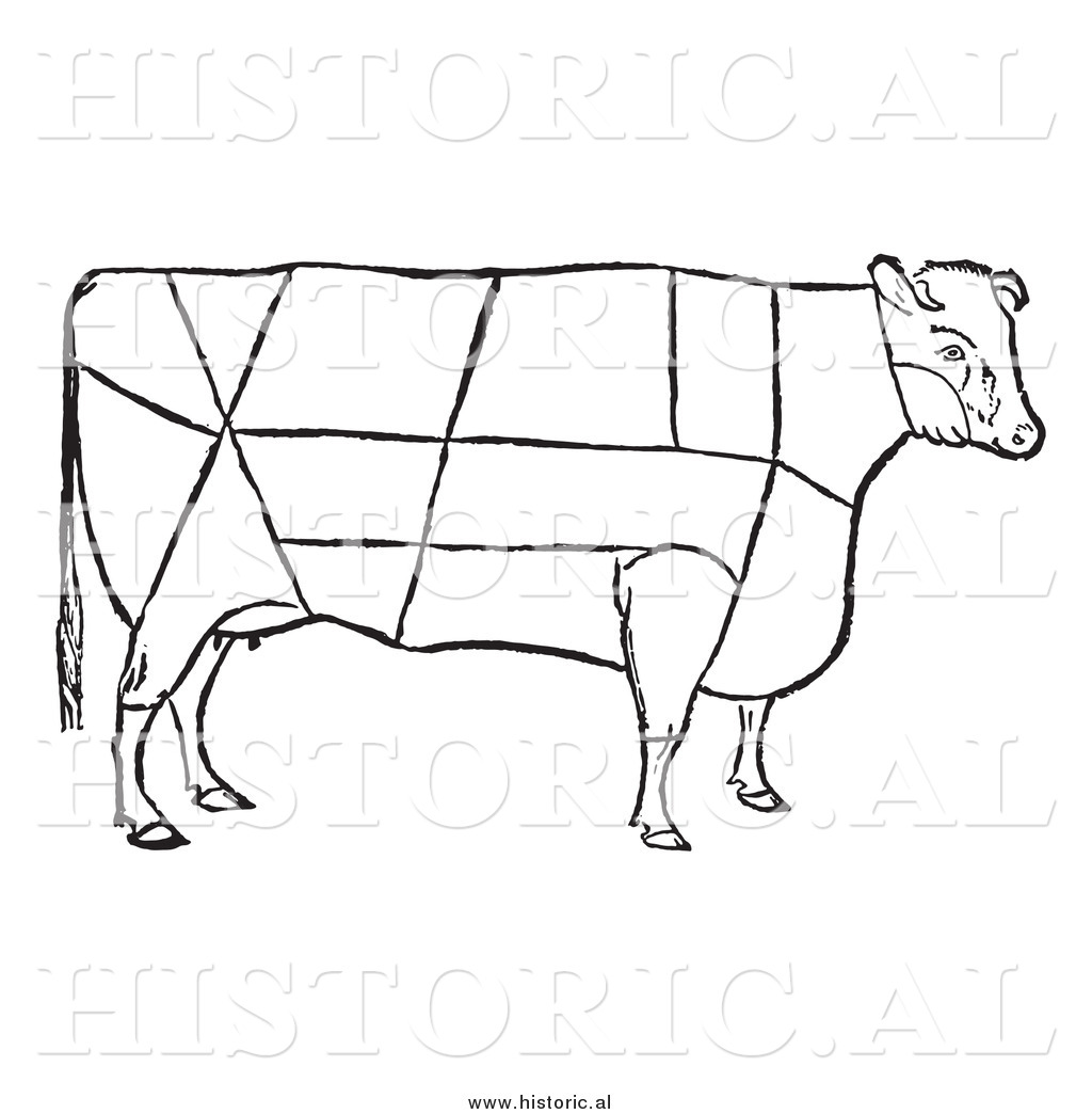 Clipart Of A Cow With Beef Cuts Outlined
