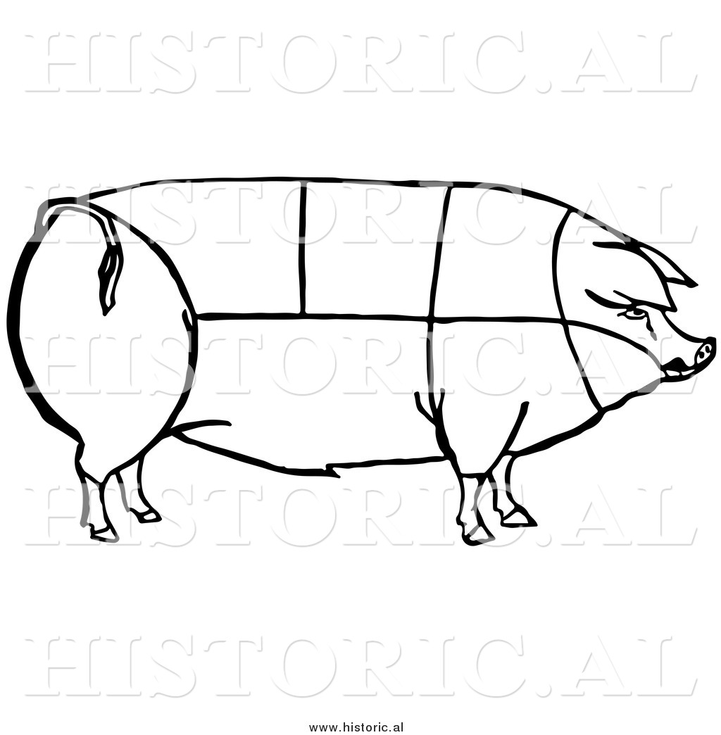 Clipart Of A Pig With Outlined Cuts Of Pork Chart