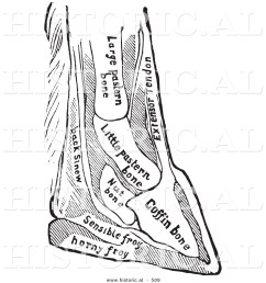 historical vector illustration of a horse diagram featuring foot with bones black and white version [ 1024 x 1044 Pixel ]