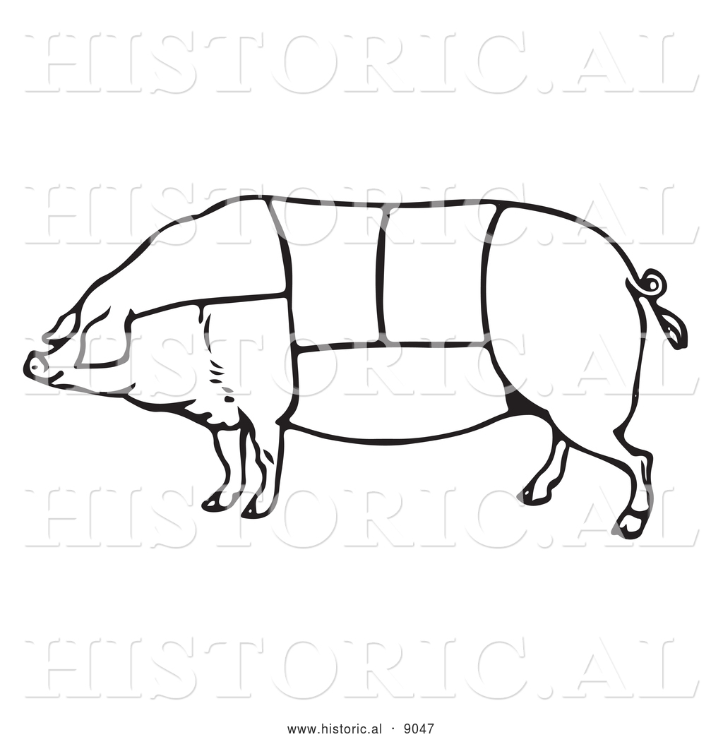 Historical Vector Illustration Of A Pig Featuring Outlined