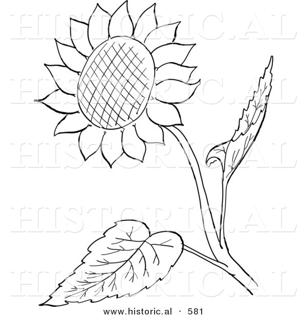 Free coloring pages of sunflower seeds of