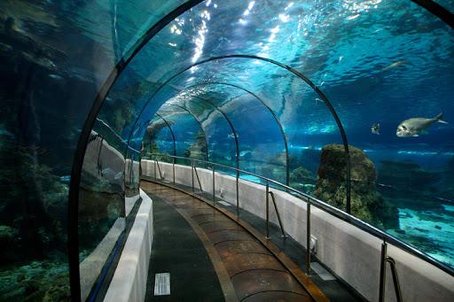 Entertainment Tour: Istanbul Aquarium Complex