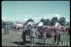 This picture was taken by Hugo Jaeger and showing Wehrmacht Fuhrmann (coachman) from an unidentified artillery unit ready to feed their horses.
