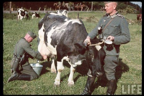 This picture was taken by Hugo Jaeger, one of Hitler's personal photographer, and showing Heer soldiers milking a rather docile Friesian cow during a break in the drive through Netherlands, Summer 1940.