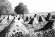 Dragon's teeth near Aachen, part of the Siegfried Line.