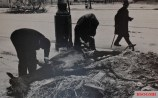 Berliners removing meat from a horse due to the no food supplies.
