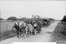 France, 1944. German horse-drawn supply train with pneumatic tires.