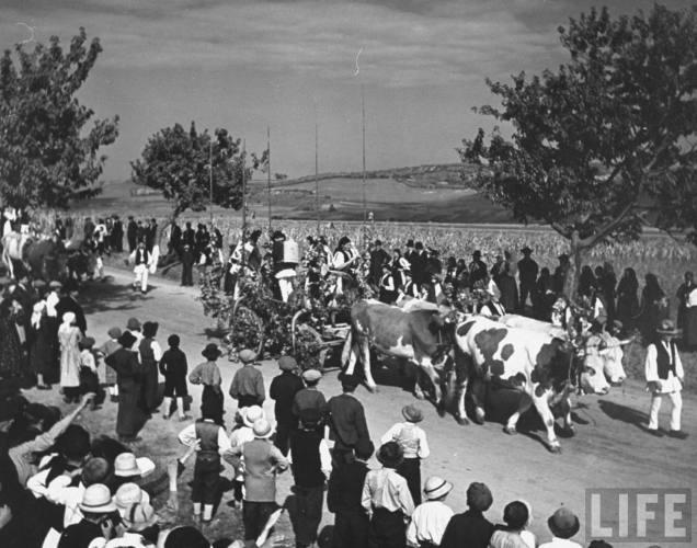 România tradiţională: car cu boi în anul 1938