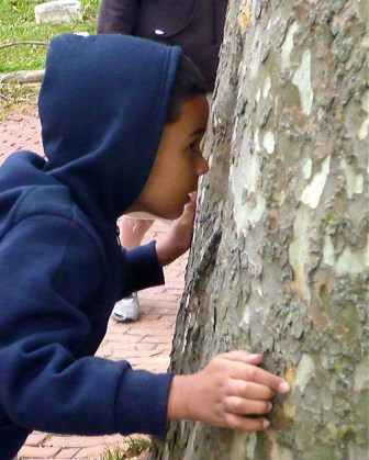 Inspecting a tree