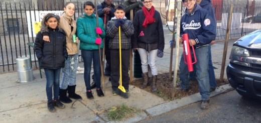 Volunteers helped us plant eight new trees