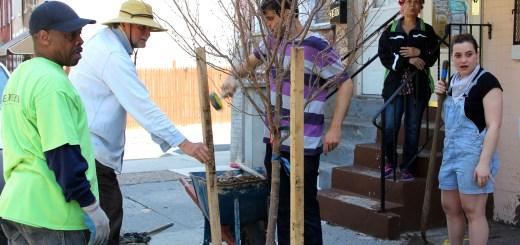 Tree Planting in Fair HIll