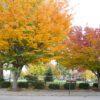Park Drive Boulevard Fall 2013