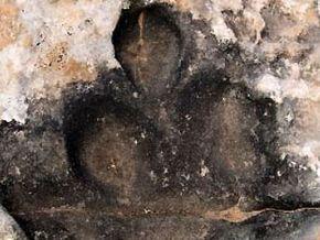 Foto van een ontdekte pootafdruk (Foto: Winston Seiler)
