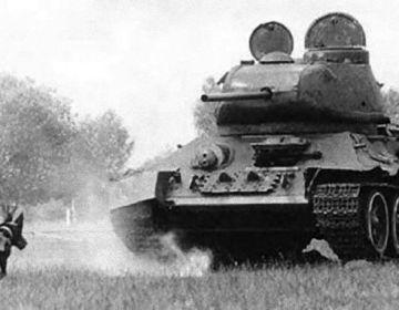 De anti-tank hond