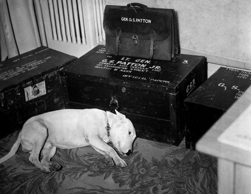 Het hondje van George S. Patton