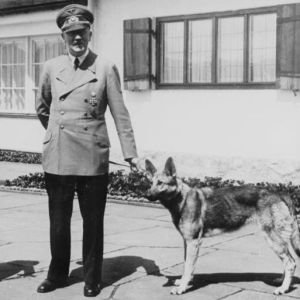 De 43 hondenlevens van Adolf Hitler