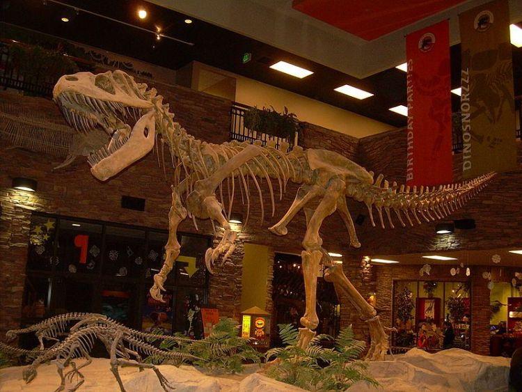 Fossiel van de Torvosaurus tanneri - Foto: CC