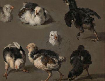 Zeven kuikens, Melchior d' Hondecoeter, ca.1665-1668 (Rijksmuseum)