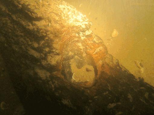 Kampen, detail wrak Kogge – Foto: ArcheoProjecten