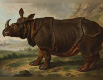 De Leidse Rhinoceros, Johann Dietrich Findorff (Collectie Staatliches Museum, Schwerin)