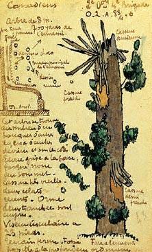IJzeren Observation Tree uit de Eerste Wereldoorlog - cc