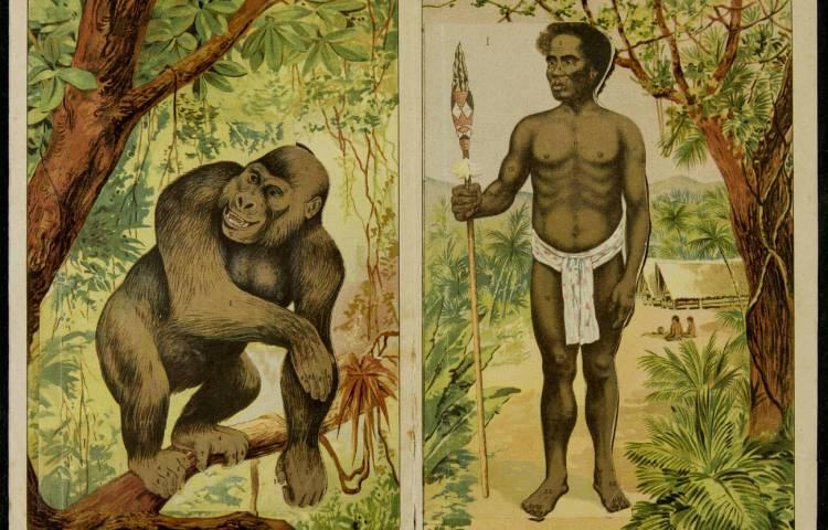 De afstamming van de aap, na Darwins Origin of Species een geliefd thema in populair wetenschappelijke boeken (Eine vergleichende Ubersicht des inneren Körperbaues von Affe und Mensch, ca. 1900, part. coll.)