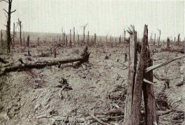 Delville Wood, september 1916 (delvillewood.com)