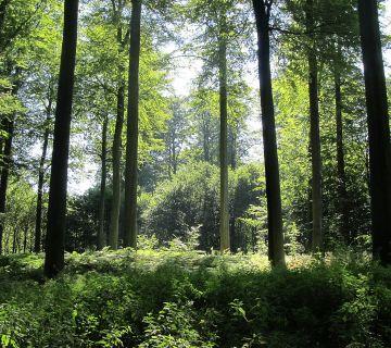 Zoniënwoud - (cc - Donar Reiskoffer)