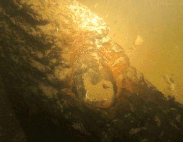 Detail van het wrak van de IJsselkogge (ADC ArcheoProjecten)