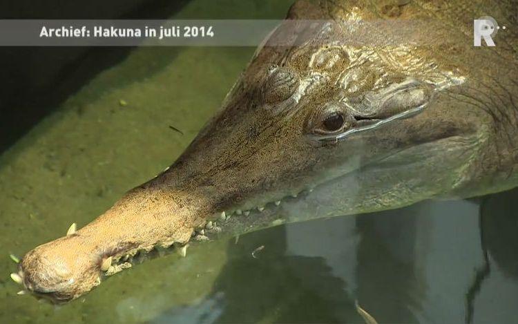 Krokodil Hakuna (Still YouTube)