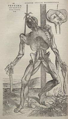 Houtsnede uit 'De humani corporis fabrica libri septem' van Vesalius