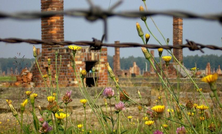 Ruïnes van barakken in Auschwitz - cc
