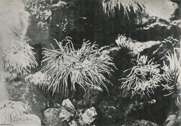 Foto die Boutan in 1893 maakte