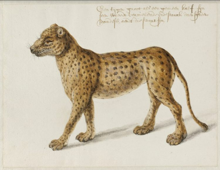 Jaguar, Frans Post (1612–1680), ca. 1638-1643. Noord-Hollands Archief, Haarlem