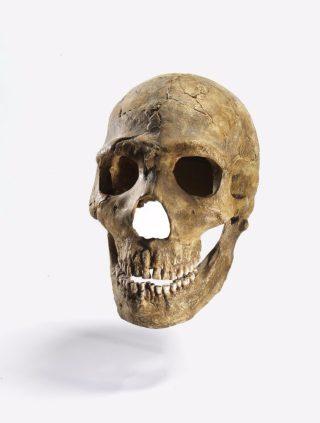 Schedel van een Neanderthaler - © The Israel Museum, Jerusalem Photo: Elie Posner