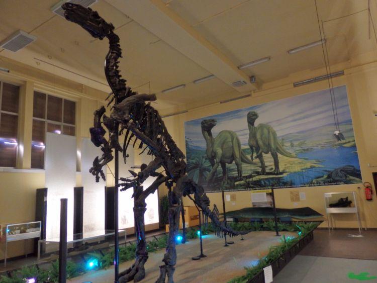 Afgietsel van het skelet van Iguanodon bernissartensis in de grote zaal van Le musée de l'Iguanodon te Bernissart. (cc - Ronny Mg)