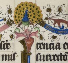 De pauw in de Pontificale van Sinte Marie, Utrecht (UU)
