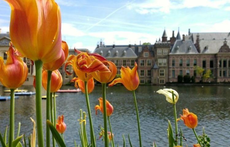 Binnenhof (cc - Pixabay)