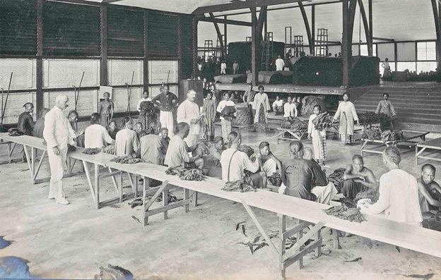 Interieur van de tabaksonderneming Mariendal van de Deli Maatschappij aan Sumatra's Oostkust. Vanaf 1958 vond veiling van de tabak plaats in Bremen in plaats van Amsterdam.