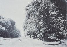 Gustave Le Gray; Road from Chailly to Fontainbleau; 1856