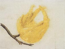 Vincenzo Leonardi; Lemon, Citrus limon (L.) Burm. f.: fingered whole fruit: watercolor and body color over black chalk, badly rubbed; 88 x 115 mm